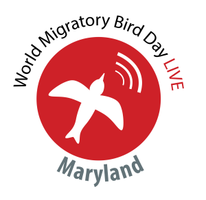 Maryland Bird Day LIVE